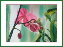 aquarelle,orchidée